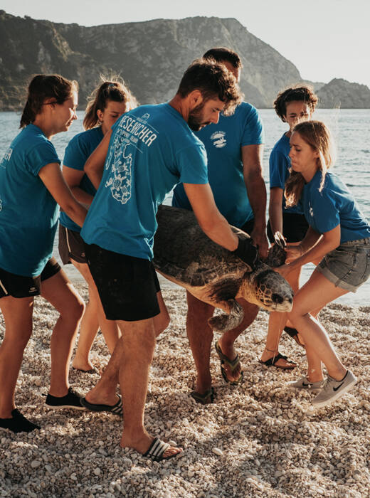 Voluntarios transportando la tortuga